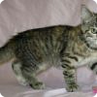 Adopt A Pet :: Penny - Powell, OH
