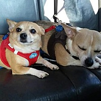 Adopt A Pet :: Tiny and Shilo - Rye Brook, NY