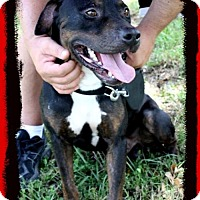 Adopt A Pet :: Boudreaux ~ in foster - Lake Jackson, TX