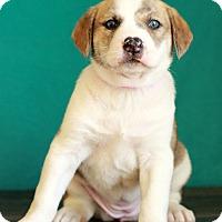 Adopt A Pet :: Spruce - Waldorf, MD