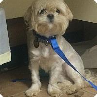 Adopt A Pet :: Sugar - Oak Ridge, NJ