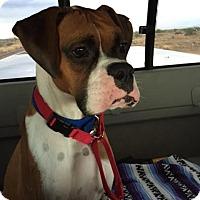 Adopt A Pet :: Ernie 15 - Phoenix, AZ