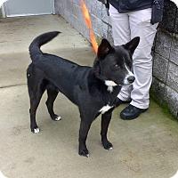 Adopt A Pet :: Stevie Ray - Virginia Beach, VA