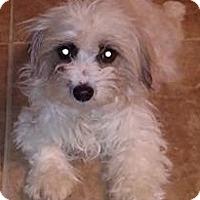 Adopt A Pet :: SANDY - Rancho Cucamonga, CA