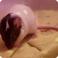 Adopt A Pet :: Mulan & Lilly - Dallas, TX