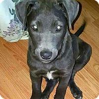 Adopt A Pet :: Kaleehsi - Olive Branch, MS