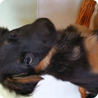 Adopt A Pet :: Dakota - Yucaipa, CA