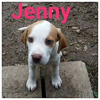 Adopt A Pet :: Jenny - fort wayne, IN