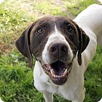 Adopt A Pet :: Jake - Fremont, NE