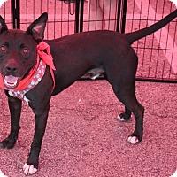 Adopt A Pet :: Troop - Lexington, KY