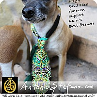 Adopt A Pet :: Slinky - Los Angeles, CA