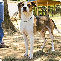 Adopt A Pet :: Fun and Loving!!! - Jasper, AL