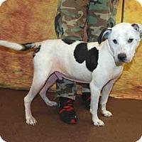 Adopt A Pet :: ALABAMA - Louisville, KY