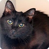 Adopt A Pet :: Nimbis - Sarasota, FL