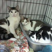 Adopt A Pet :: Charlie, Charlene & Charlotte - Milford, MA