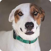 Adopt A Pet :: SCAMP - Kyle, TX