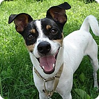 Adopt A Pet :: Kemp - Grayslake, IL