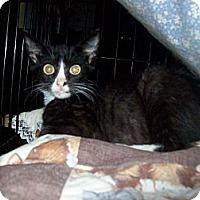 Adopt A Pet :: Tipton - Wakinsville, GA