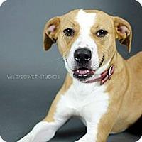 Adopt A Pet :: Nessie - Muskegon, MI