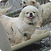 Adopt A Pet :: Beth - Hop Bottom, PA