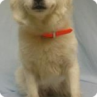 Adopt A Pet :: Lillian - Gary, IN