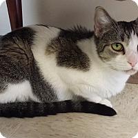 Adopt A Pet :: Riley - Bensalem, PA