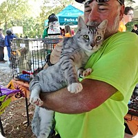 Adopt A Pet :: Kaleb - Harrisburg, NC