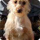 Adopt A Pet :: Jasper T~B Awesome little guy.
