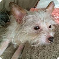 Adopt A Pet :: TIPPY - Oakland, CA