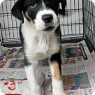 Adopt A Pet :: BL - Pup1