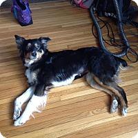 Adopt A Pet :: Gypsy - Minneapolis, MN