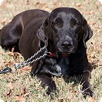 Adopt A Pet :: Josie - Broken Arrow, OK