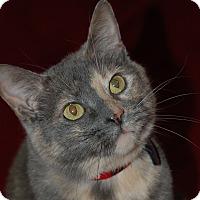Adopt A Pet :: Mya - Fairfax, VA