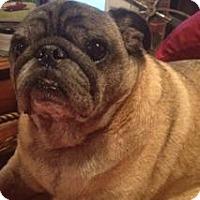 Adopt A Pet :: Max - Cordova, TN