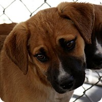 Adopt A Pet :: Atom - Picayune, MS