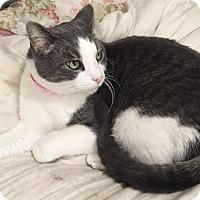 Adopt A Pet :: Hemmingway - Colorado Springs, CO