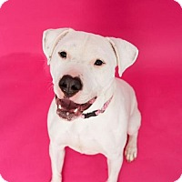 Adopt A Pet :: ROXY HEART-Deaf Dog - Roanoke, VA