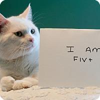 Adopt A Pet :: Samson B - Homewood, AL