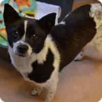 Adopt A Pet :: Poochie - Richmond, VA