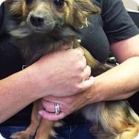 Adopt A Pet :: I'M ADOPTEDMango & Kiwi
