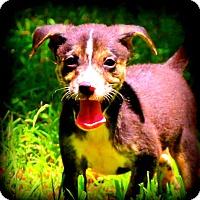 Adopt A Pet :: River~meet me! - Glastonbury, CT