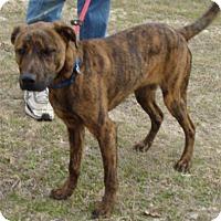 Adopt A Pet :: Huck - Dallas, TX