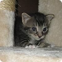 Adopt A Pet :: Burton - San Bernardino, CA