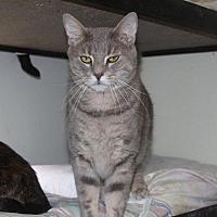 Adopt A Pet :: Bullet - New Bern, NC