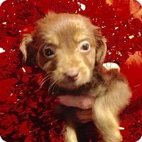 Adopt A Pet :: 2 Acey - Colton, CA