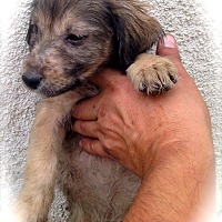 Adopt A Pet :: Michel'le Amanda Compton  Mom - Corona, CA