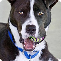 Adopt A Pet :: Cooper - Rocky Hill, CT