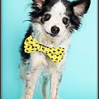 Adopt A Pet :: Jet - Phoenix, AZ