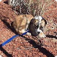 Adopt A Pet :: POOTIE - Glendale, AZ