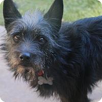 Adopt A Pet :: Kiki - Norwalk, CT